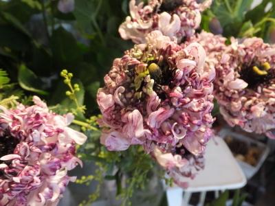 オークリーフ(初春の花)_f0049672_18040434.jpg