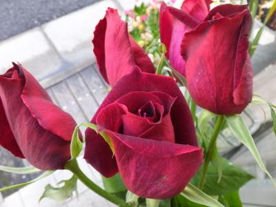 オークリーフ(初春の花)_f0049672_18042549.jpg