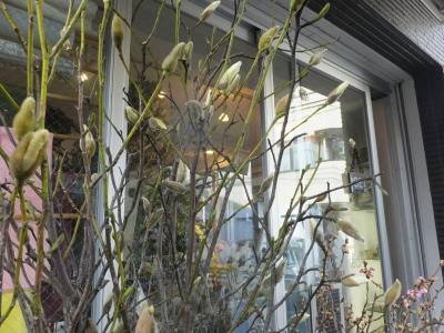 オークリーフ(初春の花)_f0049672_18053947.jpg