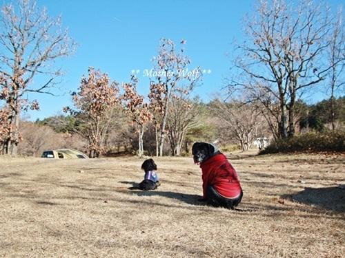 第7回キャンプ『マザーウルフCAMP~2017冬~in 静岡』①前篇_e0191026_18411276.jpg