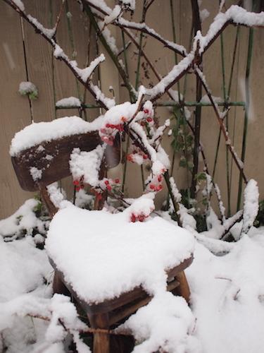初積雪_a0335560_15023710.jpg