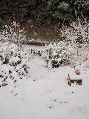 初積雪_a0335560_15023713.jpg