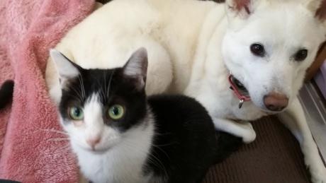 猫ののぞみとひかり★家族募集しています♪_c0372561_00281994.jpg