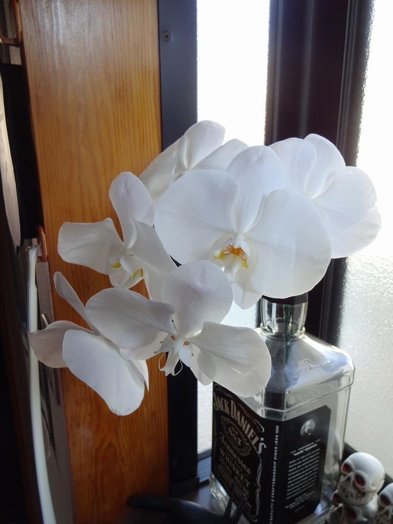 頂き物の花々でうちが華々しく彩る_d0061678_11571922.jpg