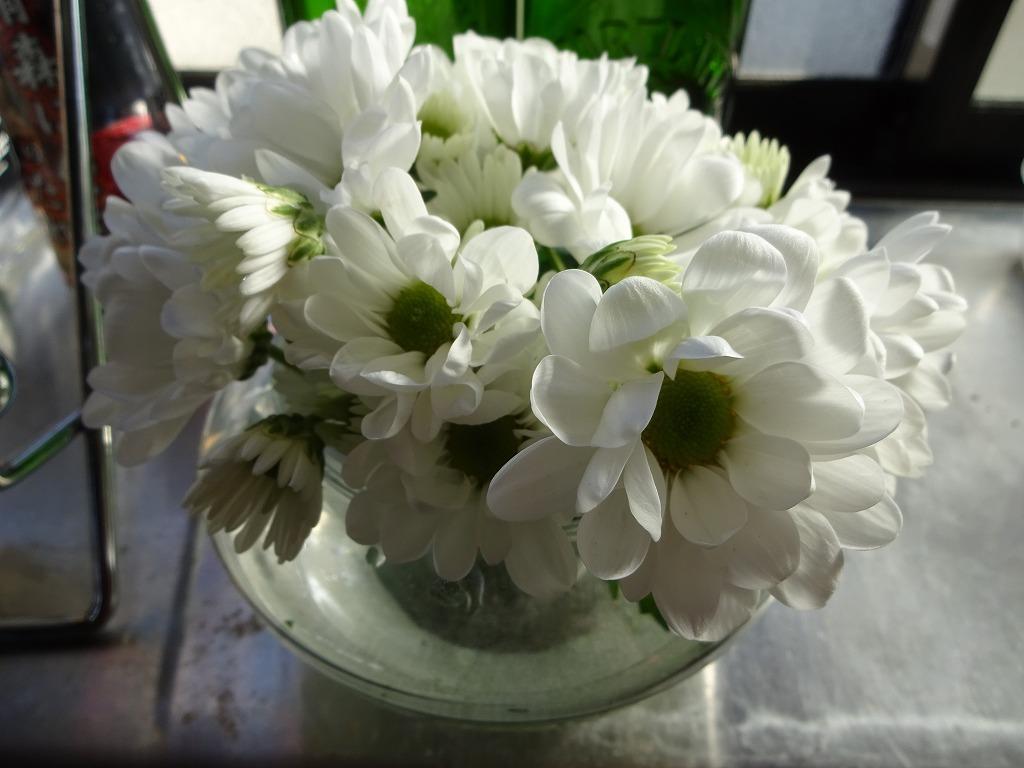 頂き物の花々でうちが華々しく彩る_d0061678_11584932.jpg