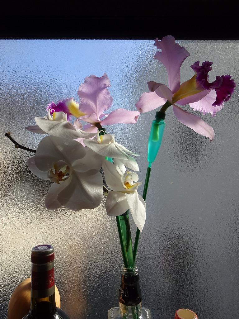 頂き物の花々でうちが華々しく彩る_d0061678_11591853.jpg