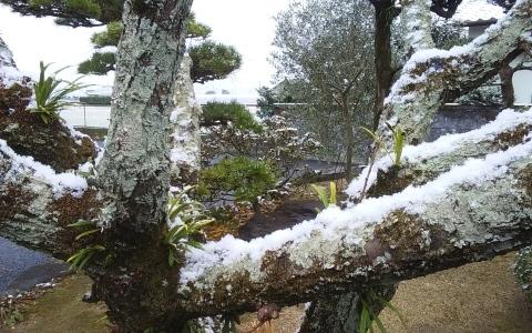 熊本でも降雪_e0184224_11280854.jpg