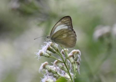 集まってきた蝶達_d0285540_19162905.jpg