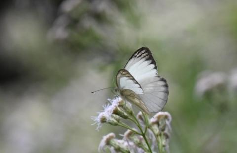集まってきた蝶達_d0285540_19163467.jpg