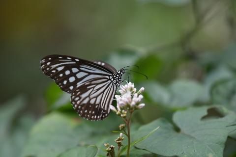 集まってきた蝶達_d0285540_19164260.jpg