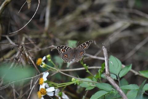 集まってきた蝶達_d0285540_19164823.jpg