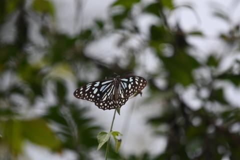 集まってきた蝶達_d0285540_19165478.jpg