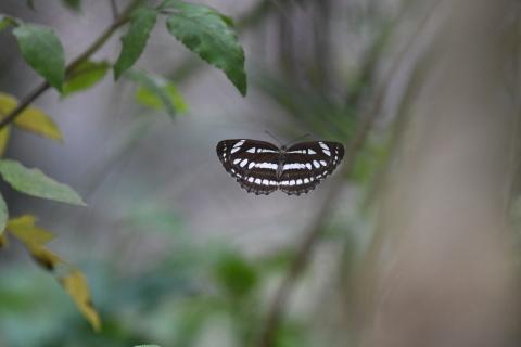 集まってきた蝶達_d0285540_19170017.jpg
