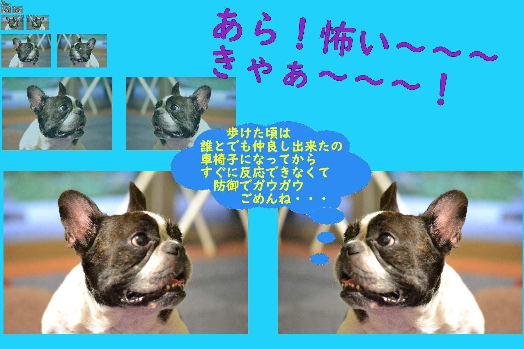 b0307951_00094575.jpg