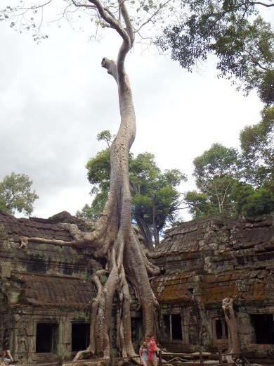 カンボジア~アンコール・ワット&タ・プローム_f0208315_14151276.jpg