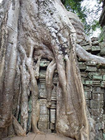 カンボジア~アンコール・ワット&タ・プローム_f0208315_14595632.jpg