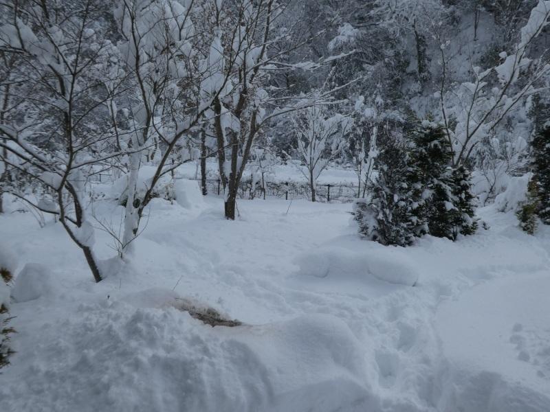 雪景色_e0365880_18591018.jpg