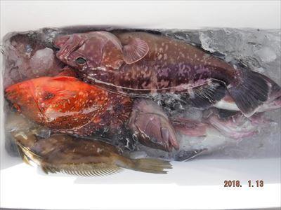 ヒラメ 根魚狙い_f0031613_20313281.jpg