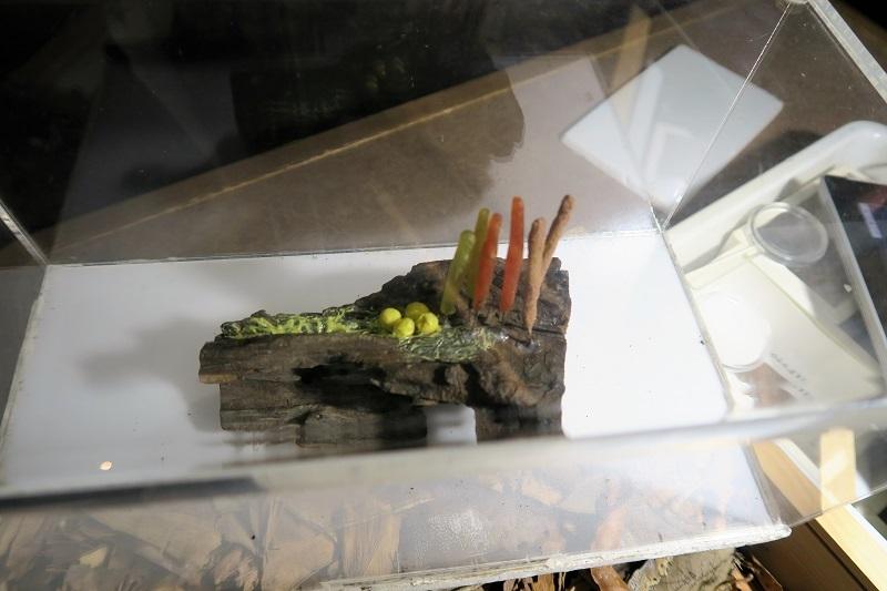 粘菌とSUBARU VIZIV(ヴィジヴ) パフォーマンス STI コンセプト_f0076731_17355423.jpg