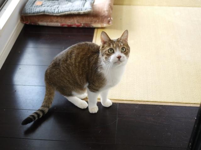 猫のお留守番 ウィンクくん編。_a0143140_22103574.jpg