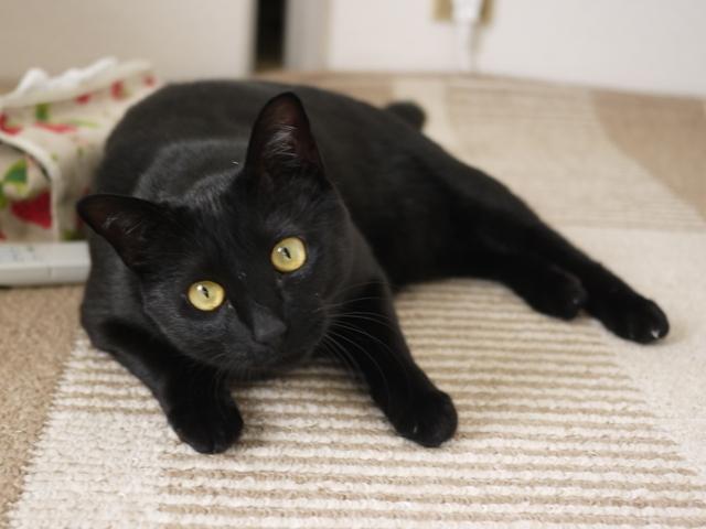 猫のお留守番 ミミちゃん編。_a0143140_22365345.jpg