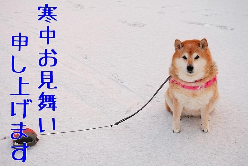 寒さ厳しき折・・・_b0314043_09265720.jpg