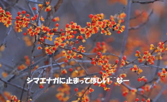 c0229170_23304435.jpg