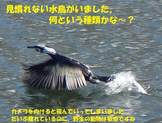 f0121712_07260836.jpg