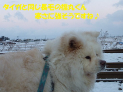 f0121712_07370269.jpg