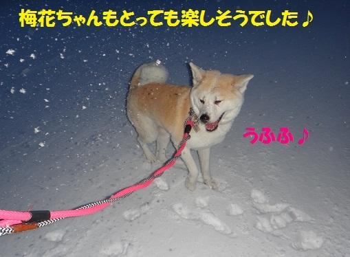 f0121712_08473251.jpg
