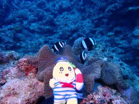 1月13日昨日に引き続きあのゆるキャラと瀬底島ダイブ!!_c0070933_21281898.jpg