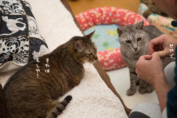 違いのわかる猫たちとまぐろ祭り _d0355333_09195209.jpg