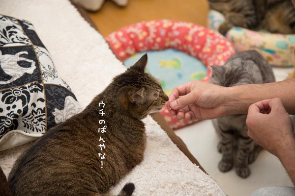 違いのわかる猫たちとまぐろ祭り _d0355333_09195793.jpg