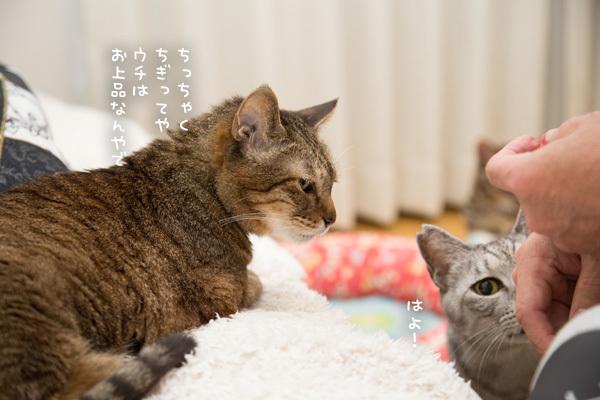 違いのわかる猫たちとまぐろ祭り _d0355333_09200198.jpg