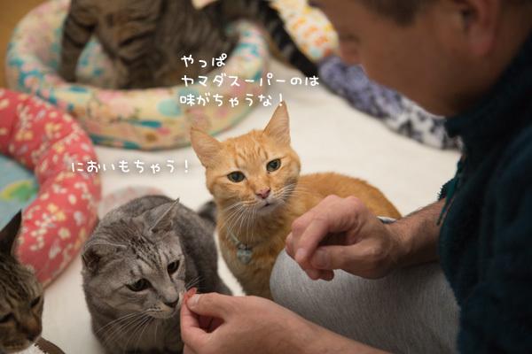 違いのわかる猫たちとまぐろ祭り _d0355333_09200662.jpg