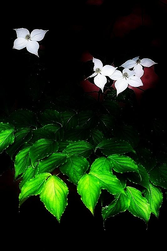春夏秋冬_b0314043_09173787.jpg