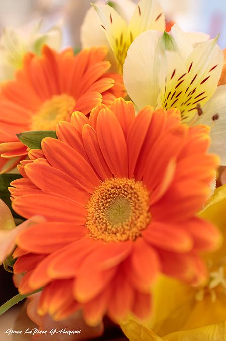花のある風景 オレンジのガーベラ_b0133053_23572677.jpg