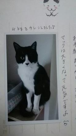 猫たち、幸せ賀状!_f0242002_21292287.jpg