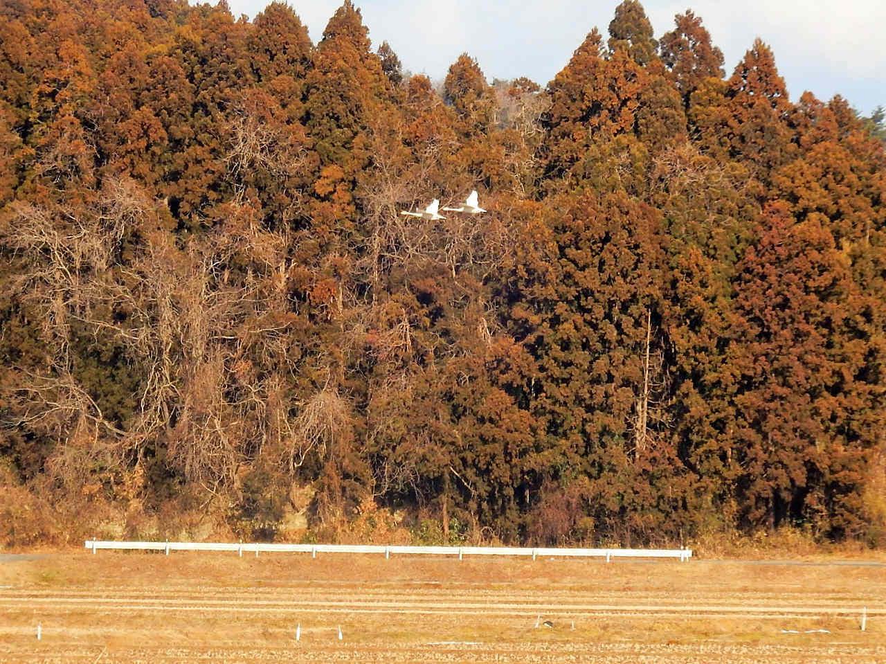 遠回りして松島へ_a0148206_11140973.jpg