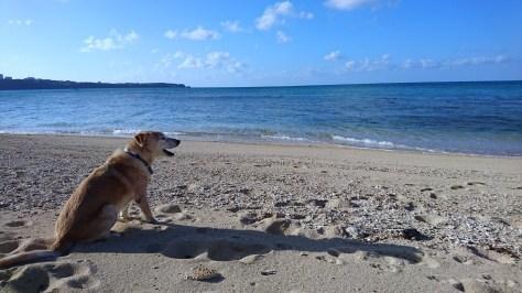1月15日ようやく回復!!沖縄らしい冬です_c0070933_21494911.jpg