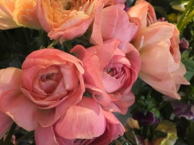 オークリーフ(黄色の花)_f0049672_16422425.jpg