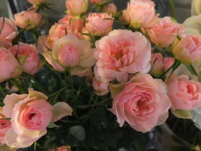 オークリーフ(黄色の花)_f0049672_16424475.jpg