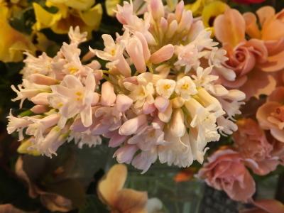 オークリーフ(黄色の花)_f0049672_16430309.jpg