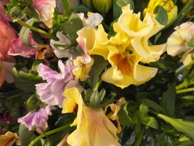 オークリーフ(黄色の花)_f0049672_16433574.jpg