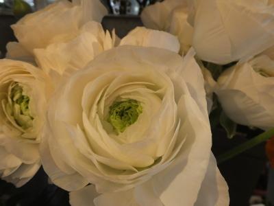 オークリーフ(黄色の花)_f0049672_16445925.jpg