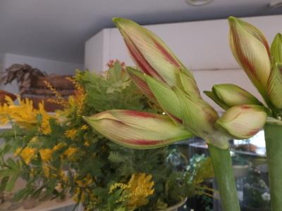 オークリーフ(黄色の花)_f0049672_16452269.jpg