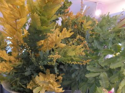 オークリーフ(黄色の花)_f0049672_16453137.jpg