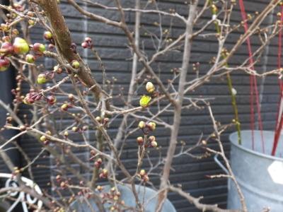 オークリーフ(黄色の花)_f0049672_16454093.jpg