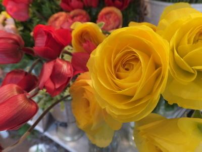 オークリーフ(黄色の花)_f0049672_17091705.jpg
