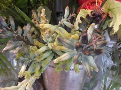 オークリーフ(黄色の花)_f0049672_17093214.jpg